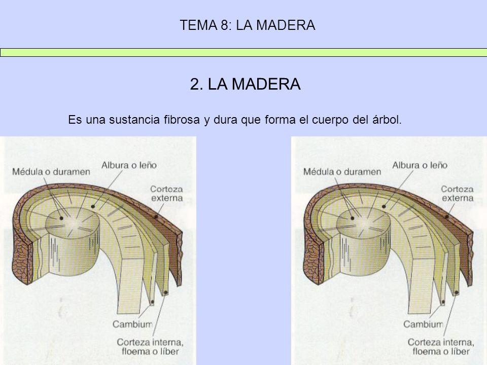 TEMA 8: LA MADERA 2. LA MADERA Es una sustancia fibrosa y dura que forma el cuerpo del árbol.