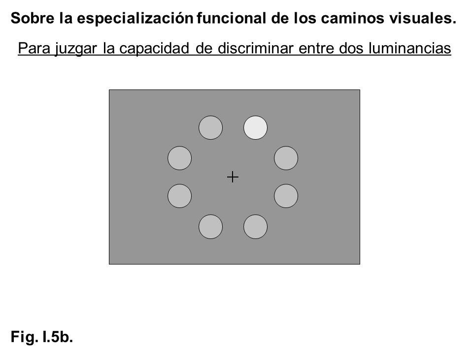 Sobre la especialización funcional de los caminos visuales. Fig. I.5b. Para juzgar la capacidad de discriminar entre dos luminancias