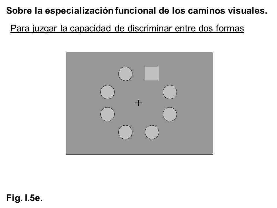 Sobre la especialización funcional de los caminos visuales. Fig. I.5e. Para juzgar la capacidad de discriminar entre dos formas