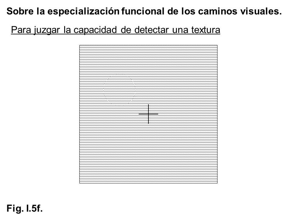 Sobre la especialización funcional de los caminos visuales. Fig. I.5f. Para juzgar la capacidad de detectar una textura