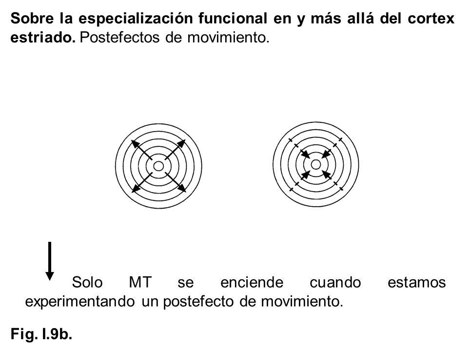 Solo MT se enciende cuando estamos experimentando un postefecto de movimiento. Sobre la especialización funcional en y más allá del cortex estriado. P