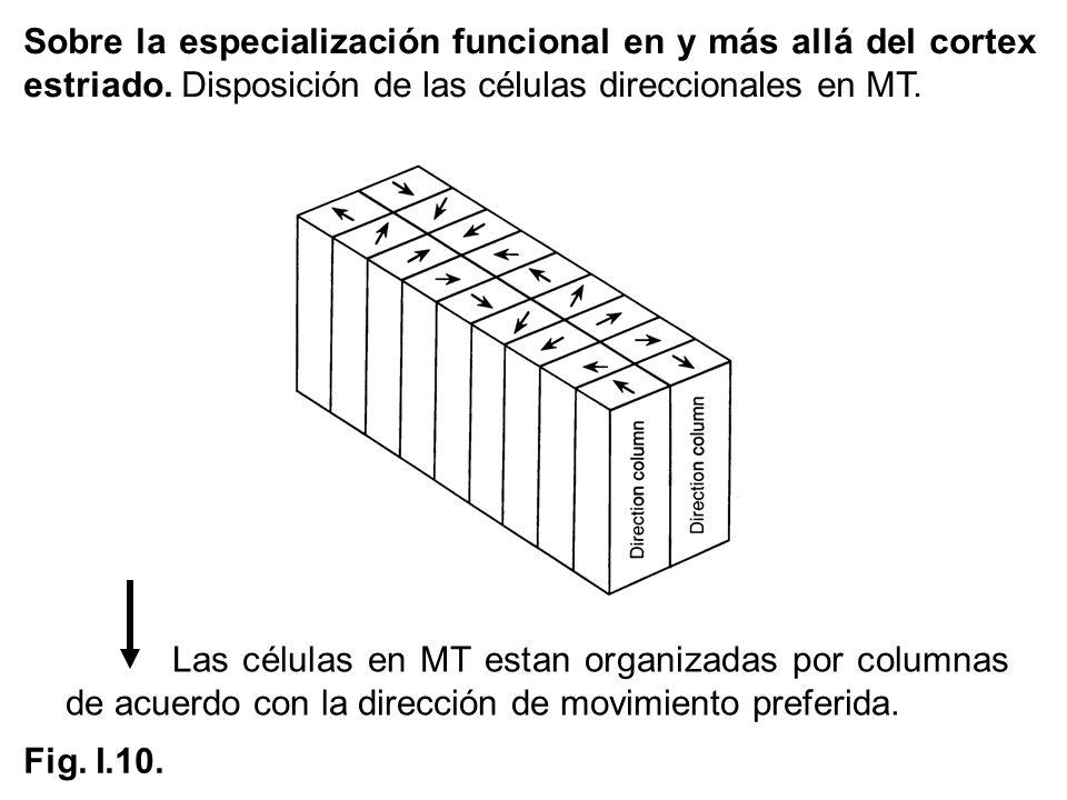 Las células en MT estan organizadas por columnas de acuerdo con la dirección de movimiento preferida. Fig. I.10. Sobre la especialización funcional en