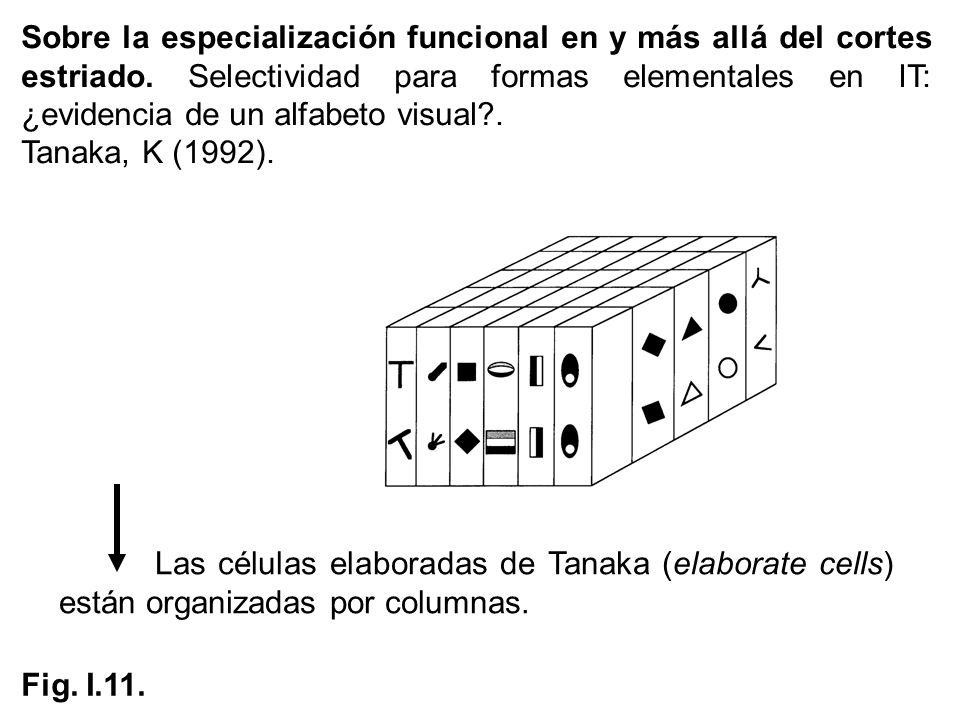 Sobre la especialización funcional en y más allá del cortes estriado. Selectividad para formas elementales en IT: ¿evidencia de un alfabeto visual?. T