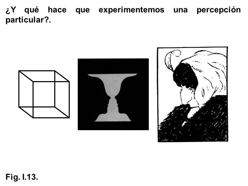 ¿Y qué hace que experimentemos una percepción particular?. Fig. I.13.