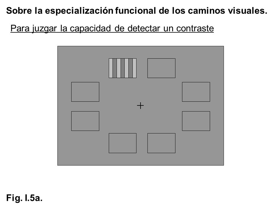 Sobre la especialización funcional de los caminos visuales. Fig. I.5a. Para juzgar la capacidad de detectar un contraste