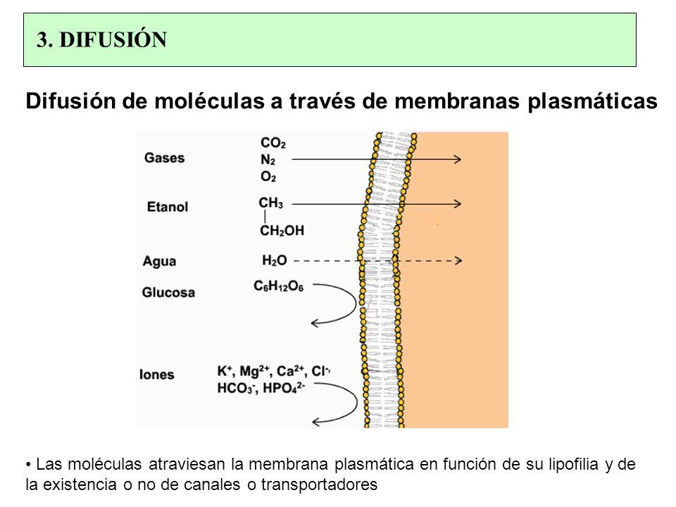 Difusión de moléculas a través de membranas plasmáticas Las moléculas atraviesan la membrana plasmática en función de su lipofilia y de la existencia