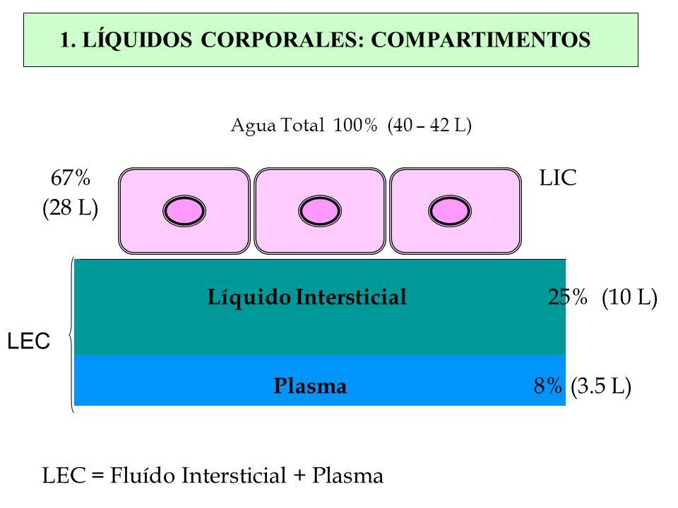 Agua Total 100% (40 – 42 L) 67% LIC (28 L) Líquido Intersticial 25% (10 L) Plasma 8% (3.5 L) LEC = Fluído Intersticial + Plasma LEC 1. LÍQUIDOS CORPOR