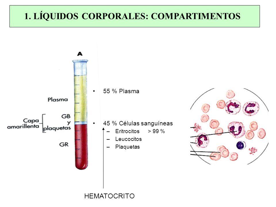 55 % Plasma 45 % Células sanguíneas –Eritrocitos > 99 % –Leucocitos –Plaquetas 1. LÍQUIDOS CORPORALES: COMPARTIMENTOS HEMATOCRITO