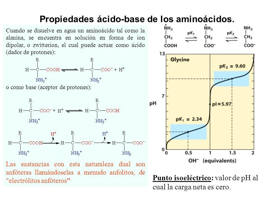Cuando se disuelve en agua un aminoácido tal como la alanina, se encuentra en solución en forma de ion dipolar, o zwitterion, el cual puede actuar como ácido (dador de protones): o como base (aceptor de protones): Propiedades ácido-base de los aminoácidos.