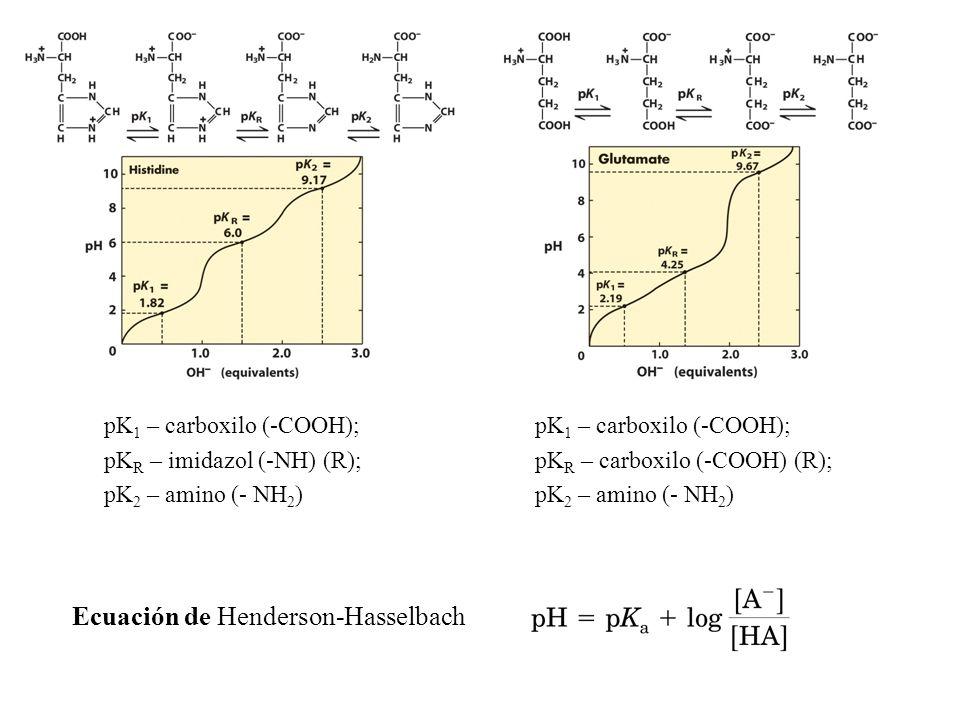 pK 1 – carboxilo (-COOH); pK R – carboxilo (-COOH) (R); pK 2 – amino (- NH 2 ) pK 1 – carboxilo (-COOH); pK R – imidazol (-NH) (R); pK 2 – amino (- NH 2 ) Ecuación de Henderson-Hasselbach