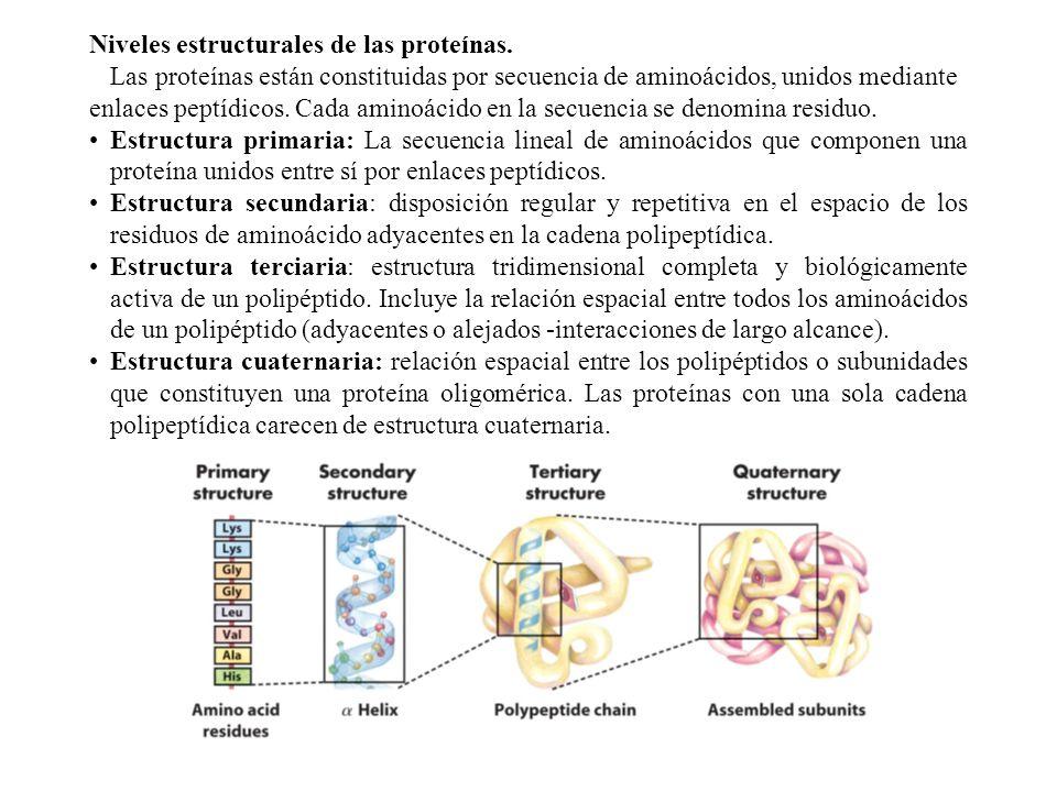 Niveles estructurales de las proteínas.