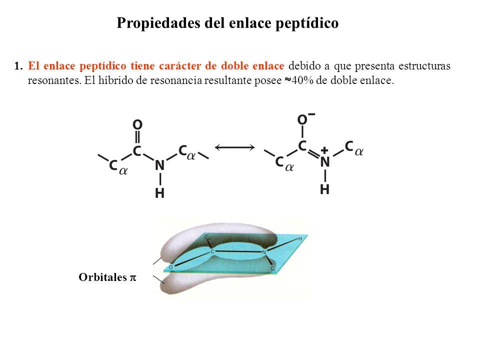 Propiedades del enlace peptídico 1.