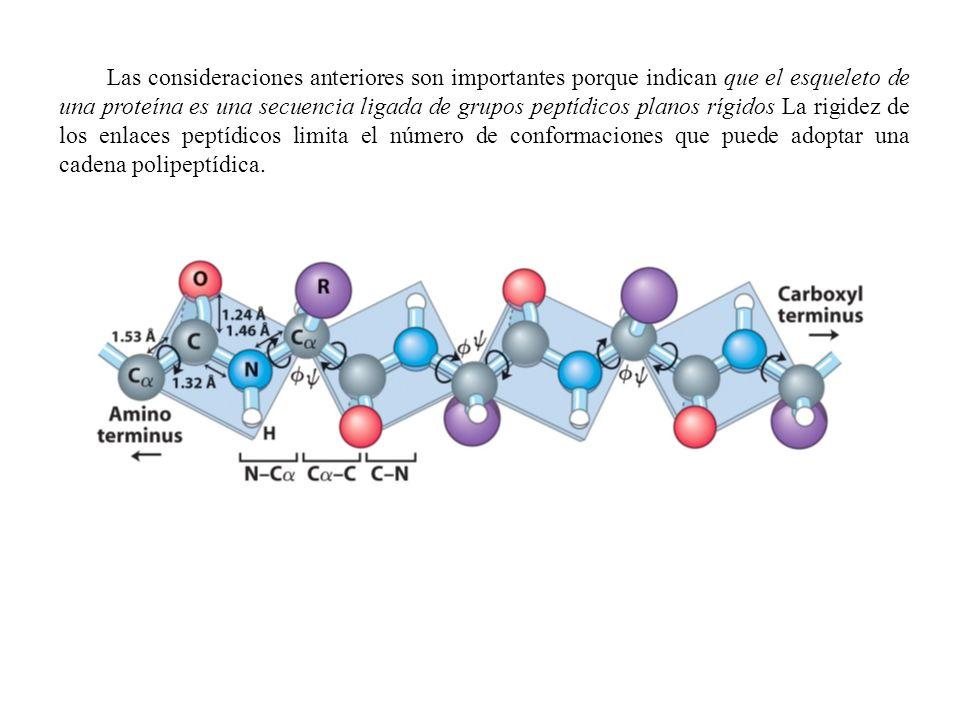 Las consideraciones anteriores son importantes porque indican que el esqueleto de una proteína es una secuencia ligada de grupos peptídicos planos rígidos La rigidez de los enlaces peptídicos limita el número de conformaciones que puede adoptar una cadena polipeptídica.