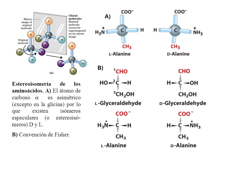 Estereoisomería de los aminoácidos.