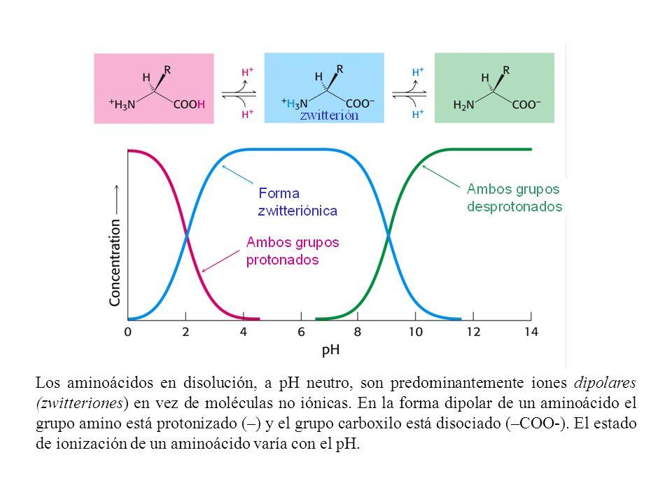 Los aminoácidos en disolución, a pH neutro, son predominantemente iones dipolares (zwitteriones) en vez de moléculas no iónicas.