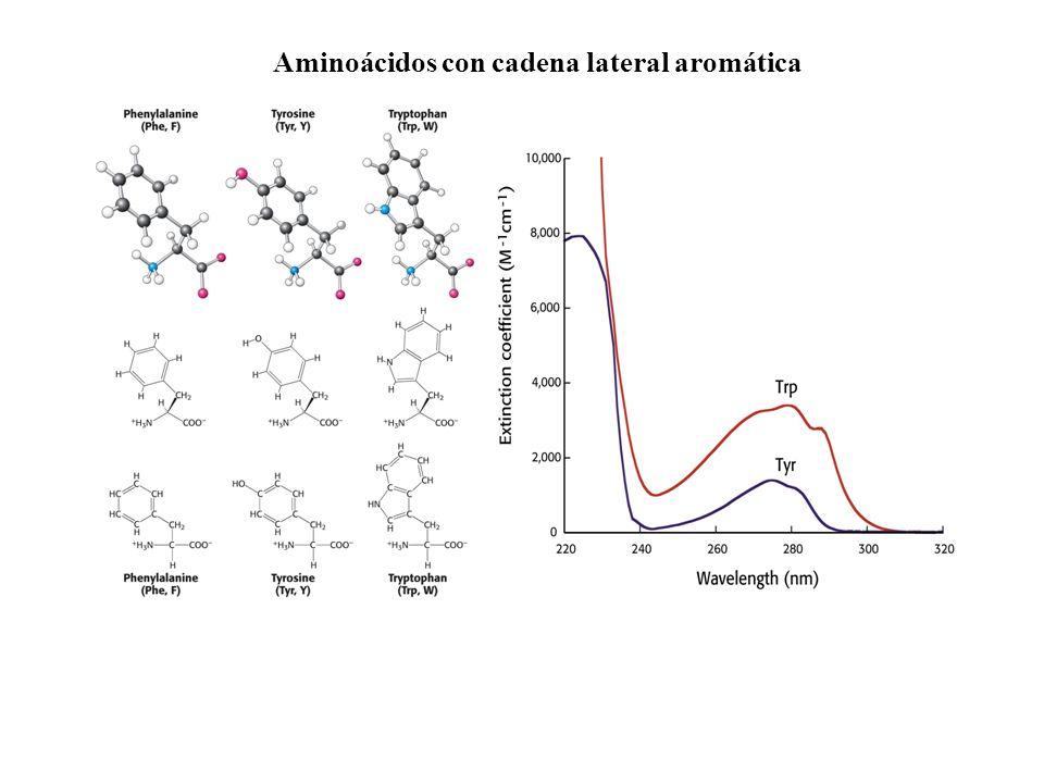 Aminoácidos con cadena lateral aromática
