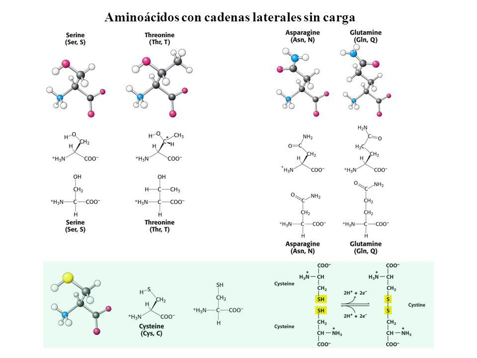 Aminoácidos con cadenas laterales sin carga