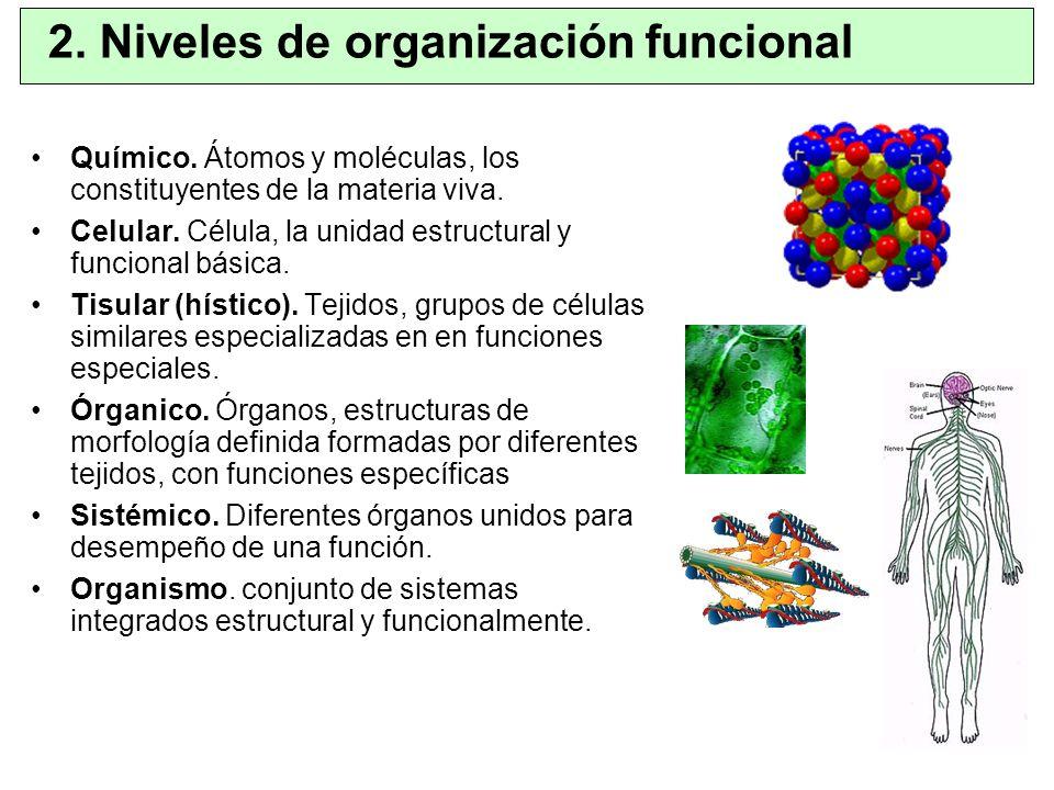 Químico. Átomos y moléculas, los constituyentes de la materia viva. Celular. Célula, la unidad estructural y funcional básica. Tisular (hístico). Teji