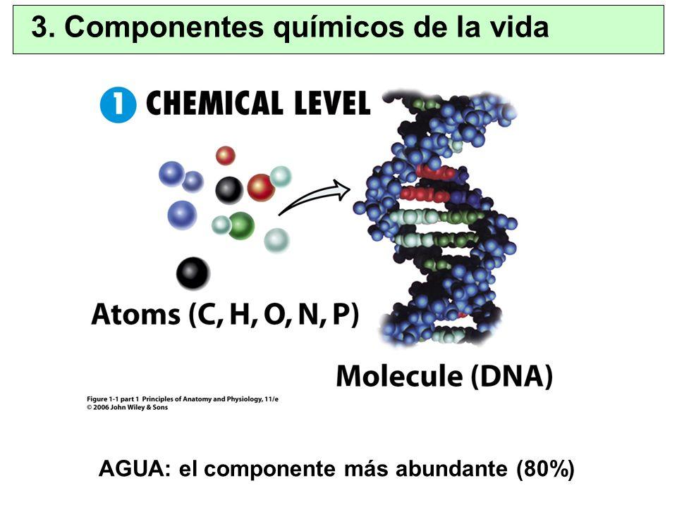 3. Componentes químicos de la vida AGUA: el componente más abundante (80%)