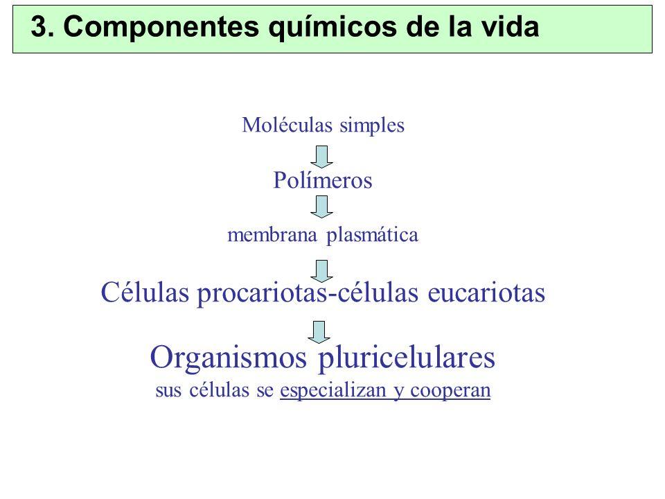 Moléculas simples Polímeros membrana plasmática Células procariotas-células eucariotas Organismos pluricelulares sus células se especializan y coopera
