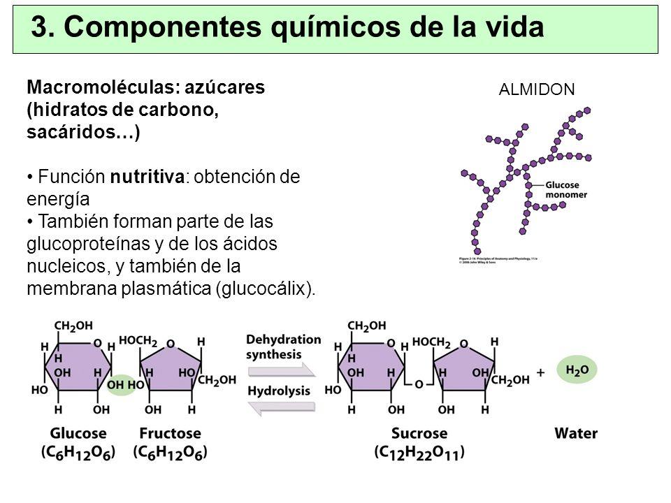 Macromoléculas: azúcares (hidratos de carbono, sacáridos…) Función nutritiva: obtención de energía También forman parte de las glucoproteínas y de los