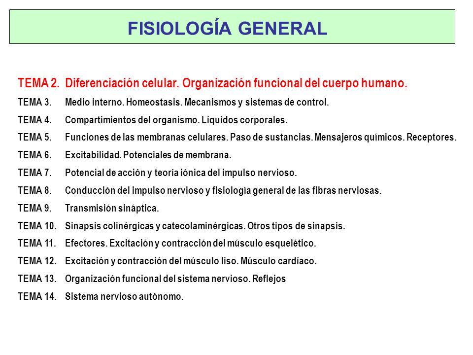 Tema 2 ORGANIZACION FUNCIONAL DEL CUERPO HUMANO Dr. Julián Carretero Departamento de Fisiología