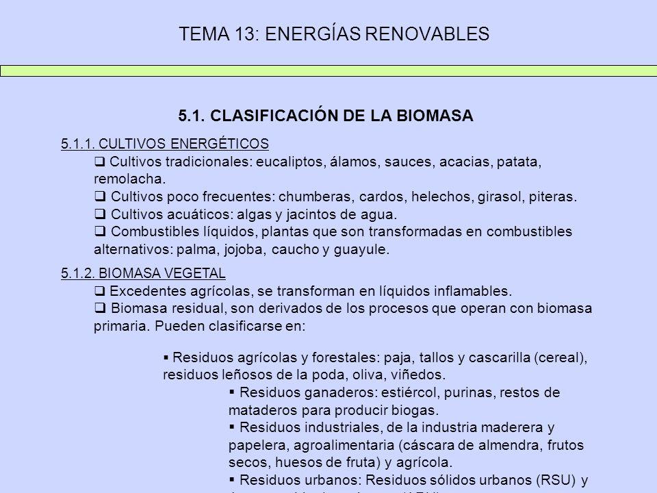 TEMA 13: ENERGÍAS RENOVABLES 5.1. CLASIFICACIÓN DE LA BIOMASA 5.1.1. CULTIVOS ENERGÉTICOS Cultivos tradicionales: eucaliptos, álamos, sauces, acacias,