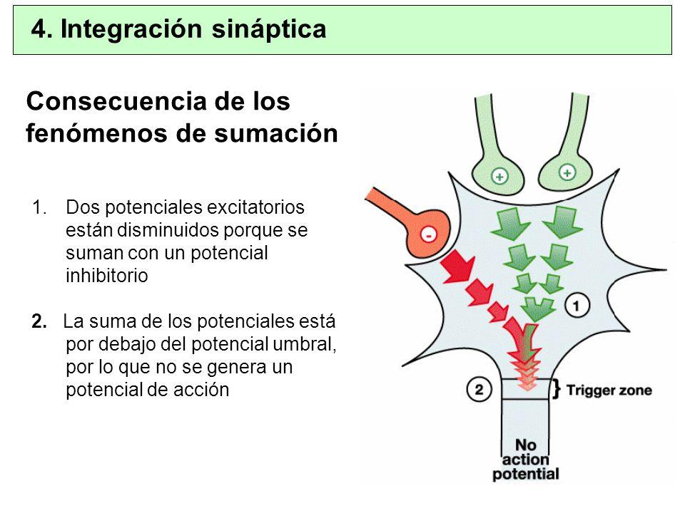 Consecuencia de los fenómenos de sumación 1.Dos potenciales excitatorios están disminuidos porque se suman con un potencial inhibitorio 2. La suma de
