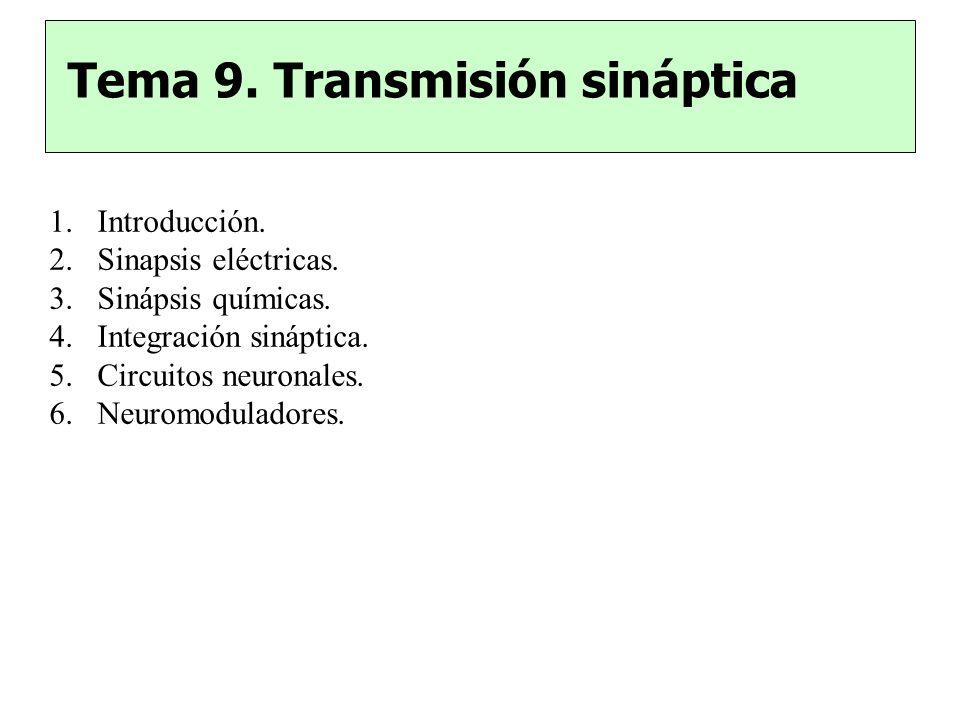 Tema 9. Transmisión sináptica 1.Introducción. 2.Sinapsis eléctricas. 3.Sinápsis químicas. 4.Integración sináptica. 5.Circuitos neuronales. 6.Neuromodu