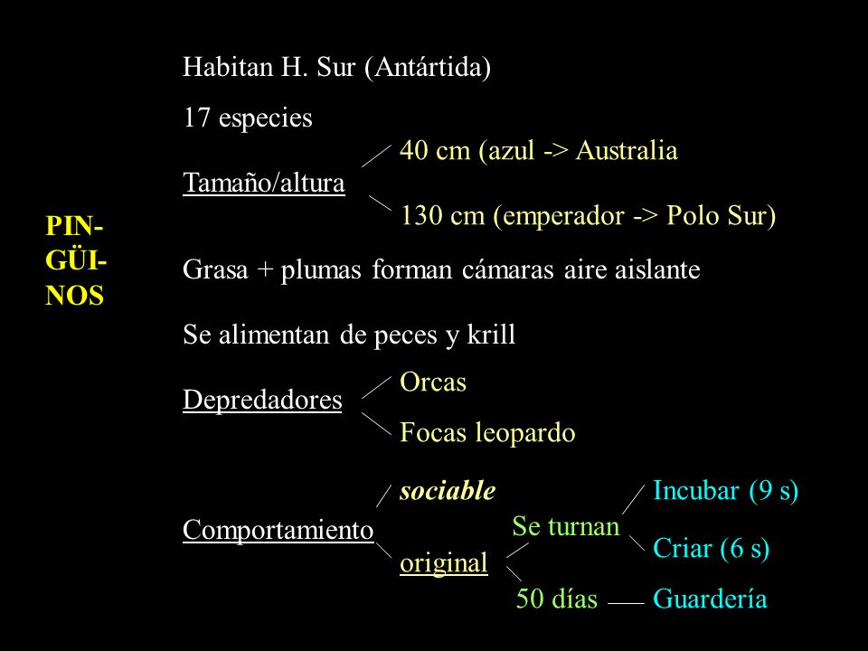 PIN- GÜI- NOS Habitan H. Sur (Antártida) 17 especies Tamaño/altura Grasa + plumas forman cámaras aire aislante Se alimentan de peces y krill Depredado