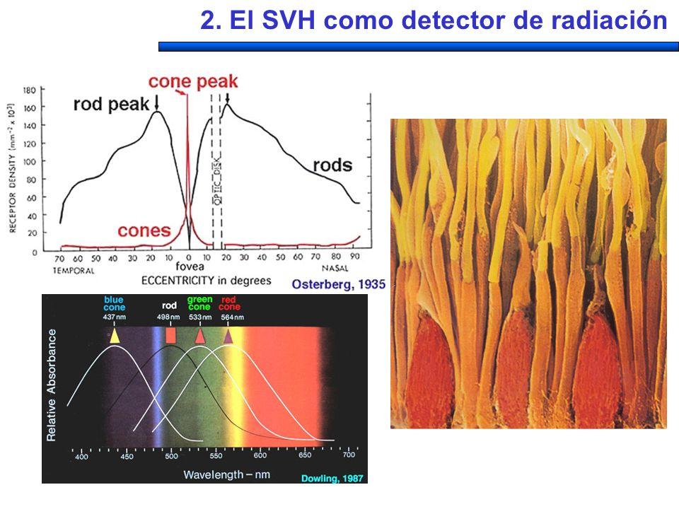 Estímulos Test, L( ) Referencia L(R) Colores percibidos Control de intensidad Monocrómatas R=1 R=10R=5 R=1.5R=1R=0.5R=1R=1.5 R=5R=10R=5 R=1.5R=1 2.1.