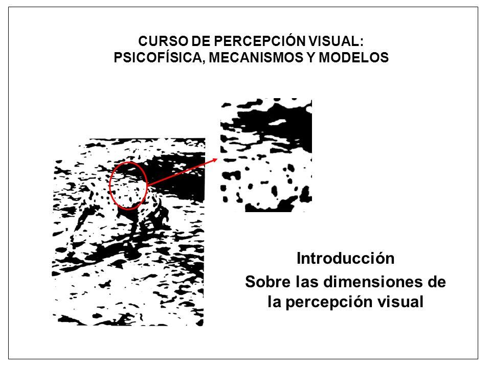CURSO DE PERCEPCIÓN VISUAL: PSICOFÍSICA, MECANISMOS Y MODELOS Introducción Sobre las dimensiones de la percepción visual