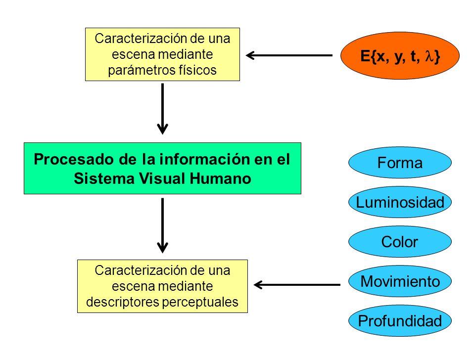 Caracterización de una escena mediante parámetros físicos Caracterización de una escena mediante descriptores perceptuales Procesado de la información en el Sistema Visual Humano E{x, y, t, } Color Movimiento Luminosidad Forma Profundidad