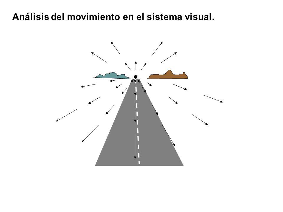 Ilusiones de movimiento.