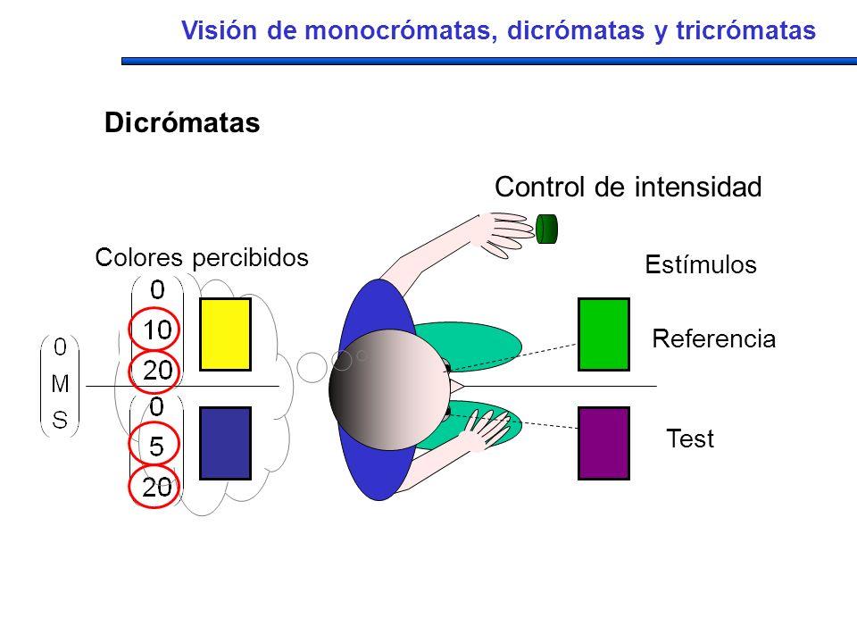 Estímulos Referencia Test Colores percibidos Control de intensidad Visión de monocrómatas, dicrómatas y tricrómatas Dicrómatas