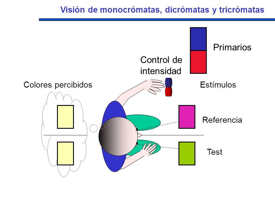 Estímulos Referencia Test Colores percibidos Control de intensidad Primarios Visión de monocrómatas, dicrómatas y tricrómatas
