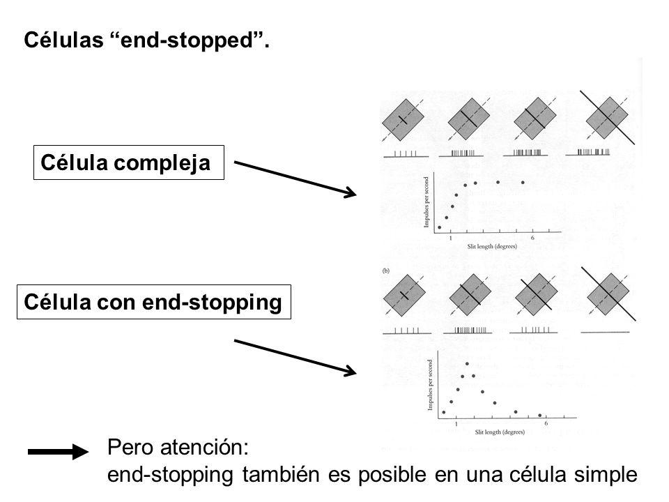 Células end-stopped. Célula con end-stopping Célula compleja Pero atención: end-stopping también es posible en una célula simple