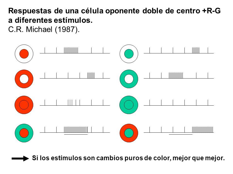 Respuestas de una célula oponente doble de centro +R-G a diferentes estímulos. C.R. Michael (1987). Si los estímulos son cambios puros de color, mejor