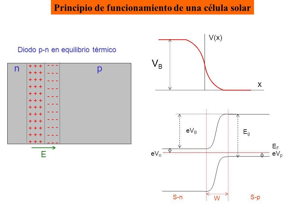 Principio de funcionamiento de una célula solar + + + - - - Diodo p-n en equilibrio térmico E np V(x) x VBVB S-n EFEF S-p EgEg eV B eV p eV n W