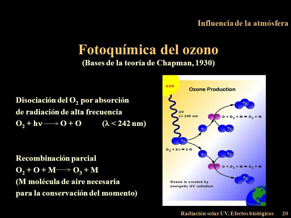 Radiación solar UV. Efectos biológicos20 Influencia de la atmósfera Fotoquímica del ozono (Bases de la teoría de Chapman, 1930) Disociación del O 2 po