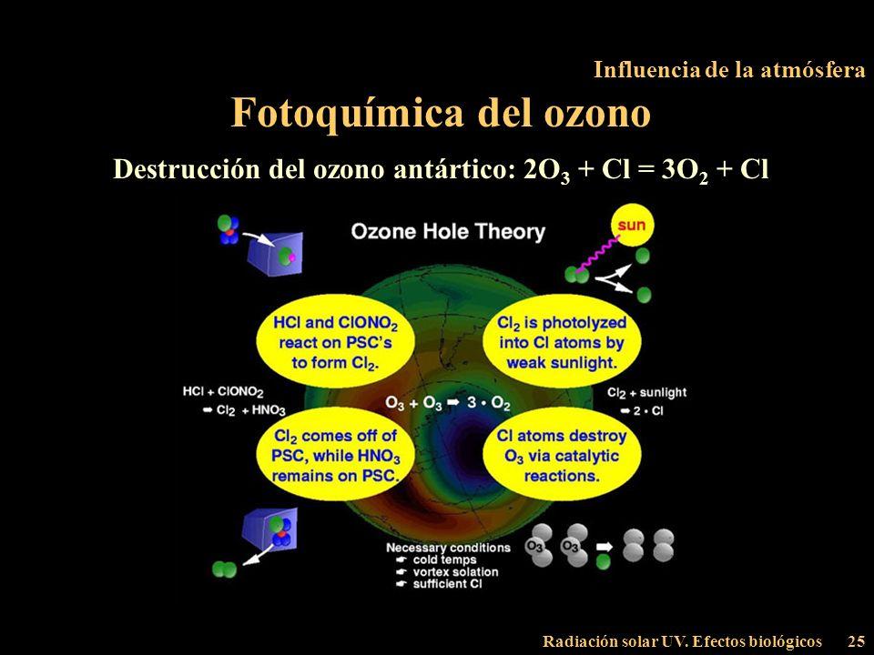 Radiación solar UV. Efectos biológicos25 Influencia de la atmósfera Fotoquímica del ozono Destrucción del ozono antártico: 2O 3 + Cl = 3O 2 + Cl