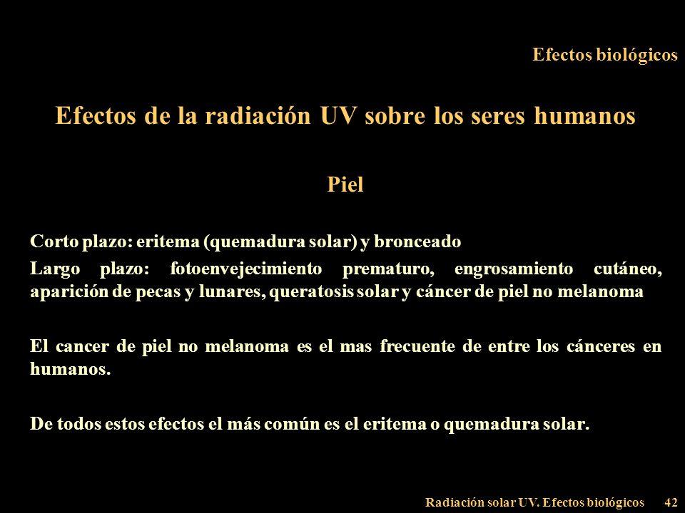 Radiación solar UV. Efectos biológicos42 Efectos biológicos Efectos de la radiación UV sobre los seres humanos Piel Corto plazo: eritema (quemadura so