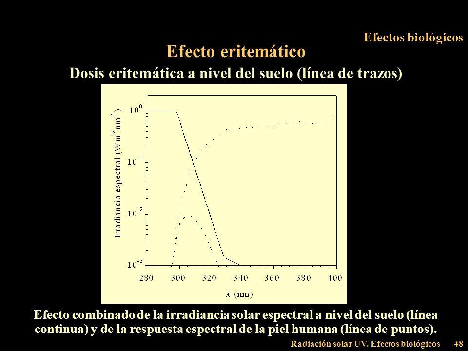 Radiación solar UV. Efectos biológicos48 Efectos biológicos Efecto eritemático Dosis eritemática a nivel del suelo (línea de trazos) Efecto combinado