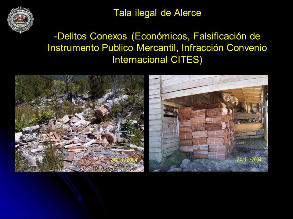 Tala ilegal de Alerce -Delitos Conexos (Económicos, Falsificación de Instrumento Publico Mercantil, Infracción Convenio Internacional CITES)