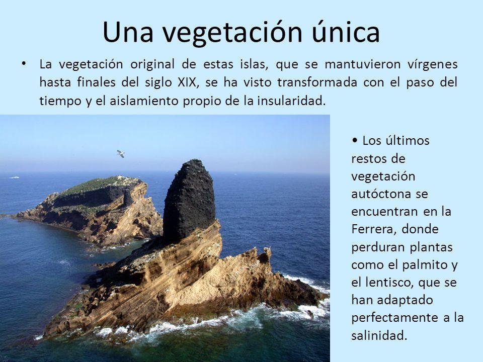 Una vegetación única La vegetación original de estas islas, que se mantuvieron vírgenes hasta finales del siglo XIX, se ha visto transformada con el p