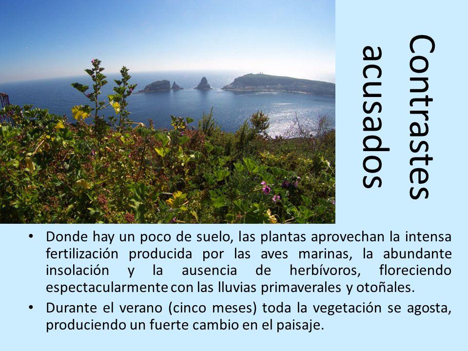 Contrastes acusados Donde hay un poco de suelo, las plantas aprovechan la intensa fertilización producida por las aves marinas, la abundante insolació