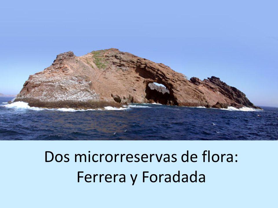 Dos microrreservas de flora: Ferrera y Foradada