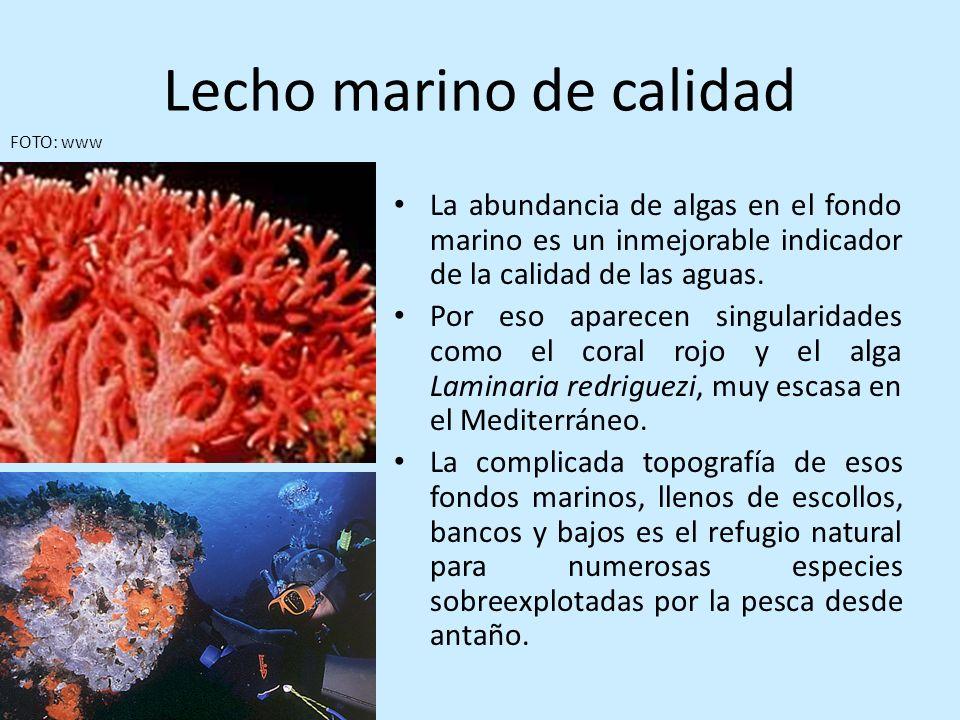 Lecho marino de calidad La abundancia de algas en el fondo marino es un inmejorable indicador de la calidad de las aguas. Por eso aparecen singularida