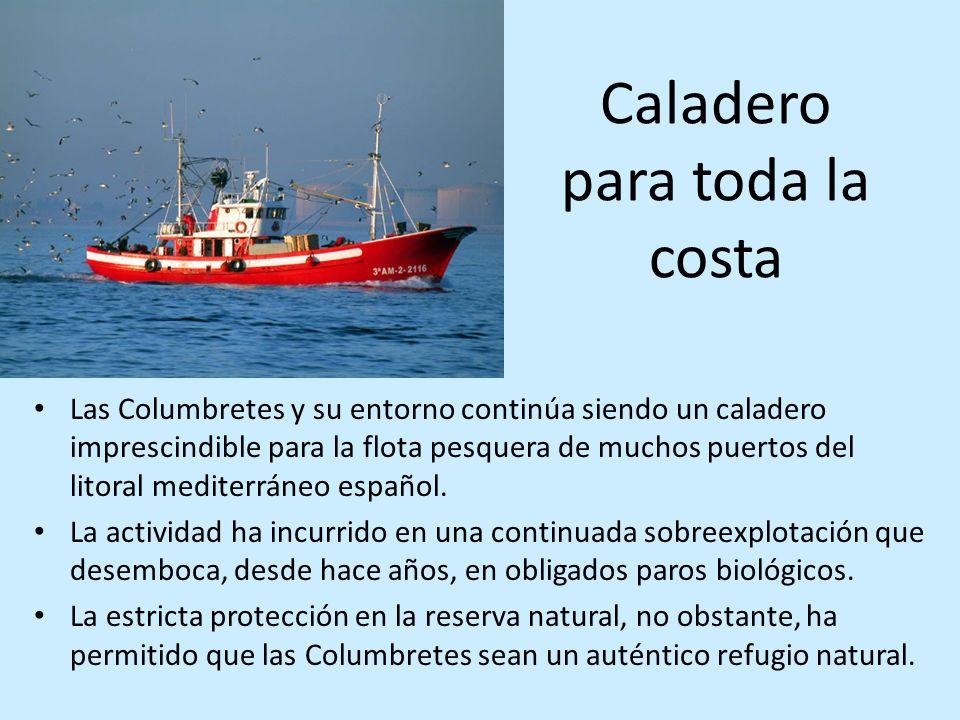 Caladero para toda la costa Las Columbretes y su entorno continúa siendo un caladero imprescindible para la flota pesquera de muchos puertos del litor