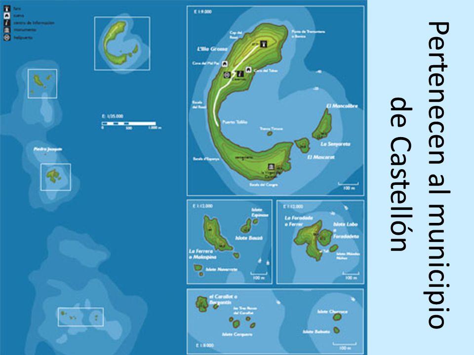 Tres tipos de hábitat submarino 1.Praderas de la SEBA, una fanerógama marina (Cymodocea nodosa), muy importantes porque son zonas de refugio, alimentación y cría de infinidad de organismos marinos; 2.Los fondos de maërl, compuestos por algas calcáreas y que abarcan extensas zonas en Columbretes; 3.Los fondos rocosos, donde vive la langosta roja (Palinurus elephas) y donde se pueden encontrar, a mucha profundidad, gorgonias rojas (Paramuricea clavata) únicas en el Mediterráneo.